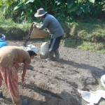 Planting Potatoes in Hananoie