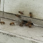 (English) Beehive in Hananoie